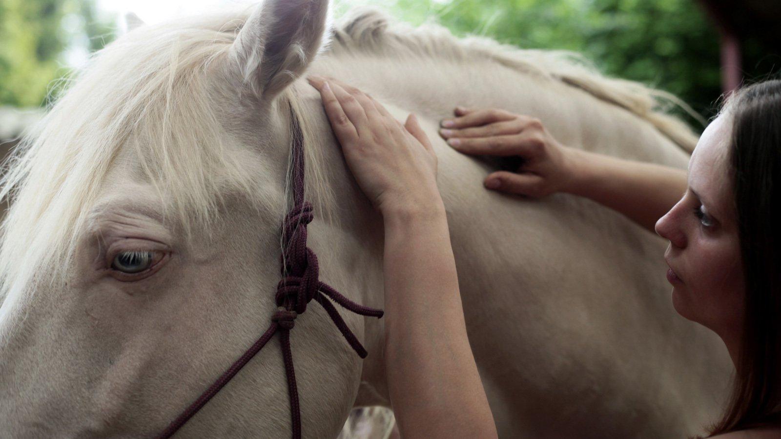FP-Physio - Physiothérapie équine et canine